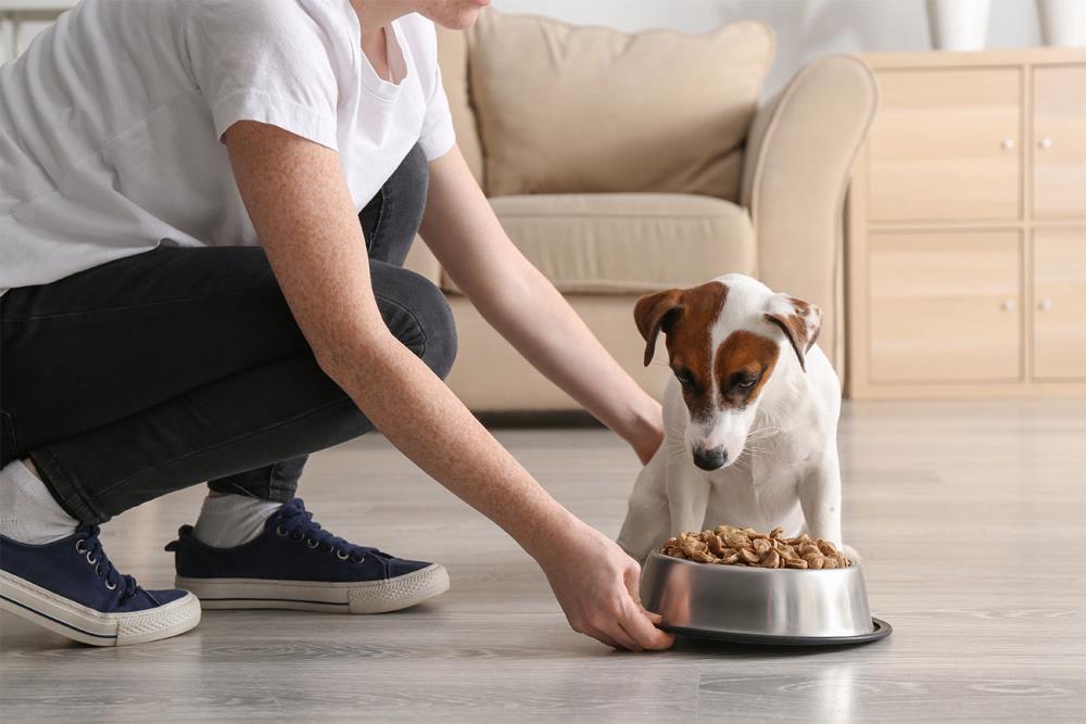 Quanto deve mangiare un cane: informazioni e consigli utili