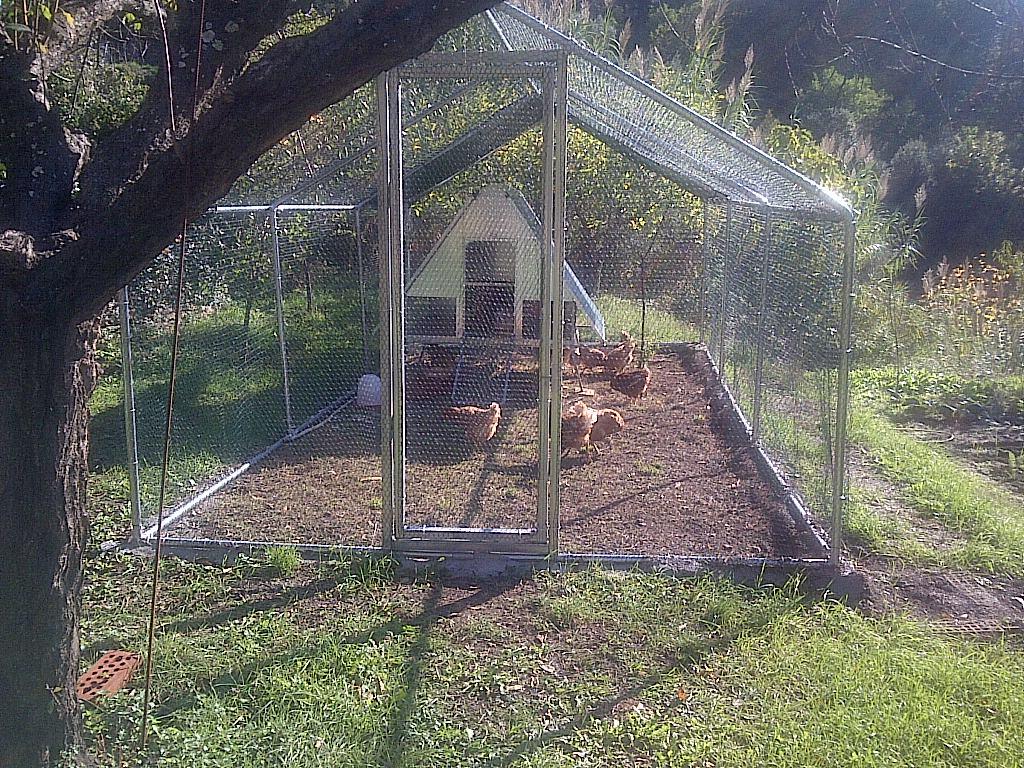 Recinto per galline spazioso pulito e sicuro for Casette per conigli fai da te