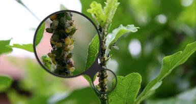 Consigli su come difendersi in modo semplice e naturale for Parassiti piante