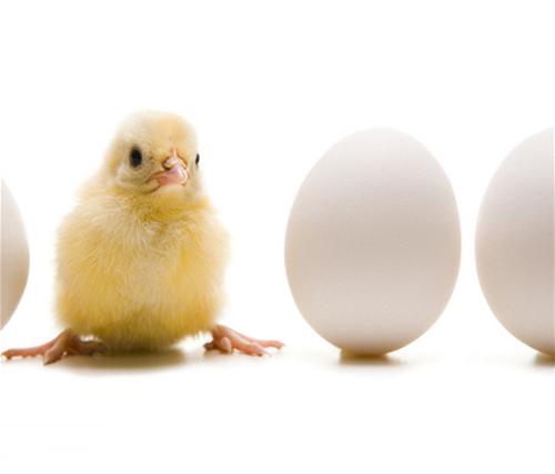 La Deposizione Delle Uova Ecco Cosa Cè Da Sapere